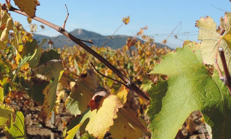 Bodegas Obergo y su vino del Somontano color marrón