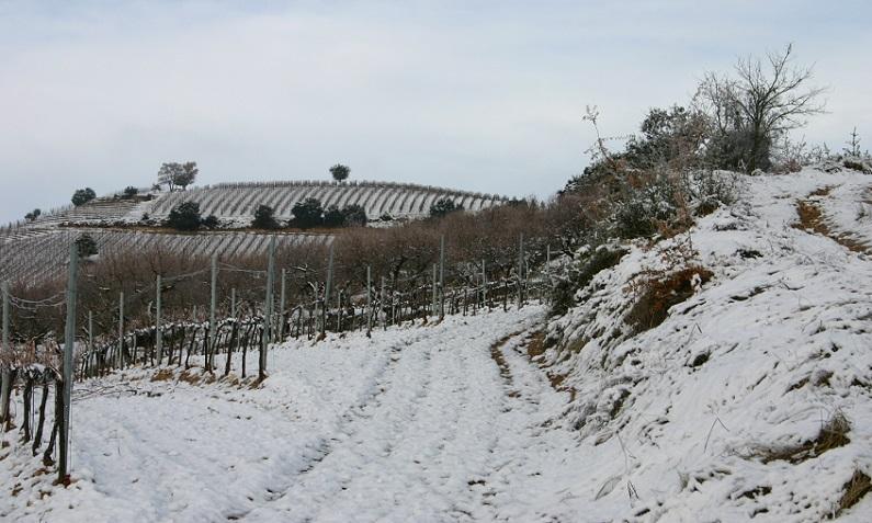 La importancia de la nieve en las viñas