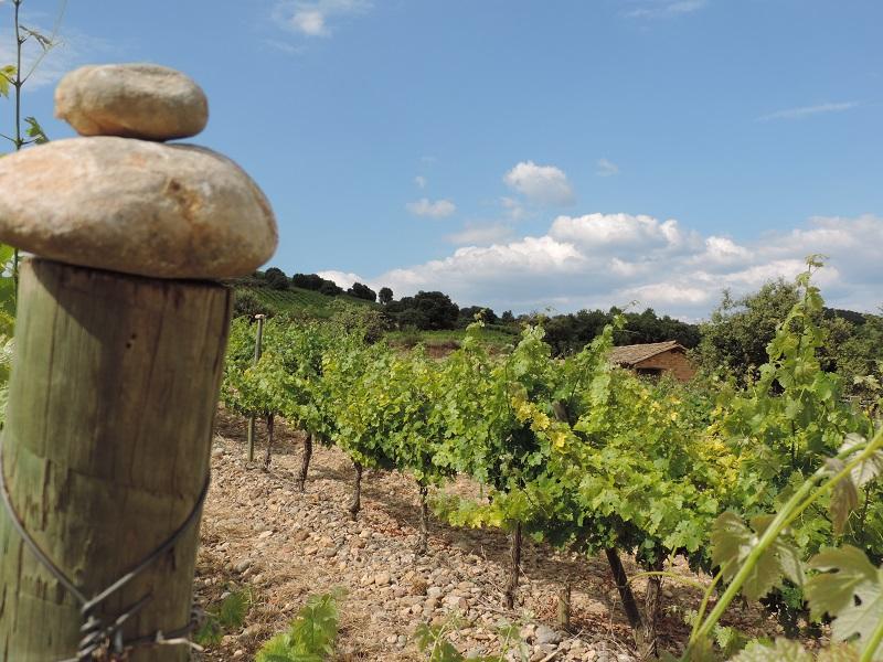 <strong>¿Cuál es la clave de la calidad de los vinos de Bodegas Obergo?</strong>