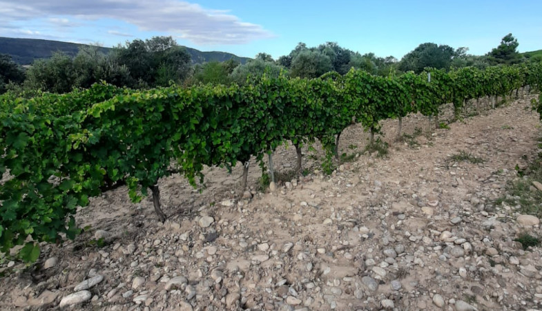 How does SOIL shape wines?